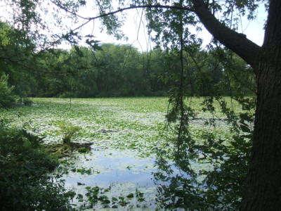 August 12, 2007: Hartman Reserve Pond.